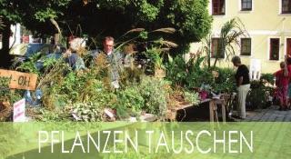 Pflanzen tauschen