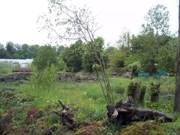 Bilder vom Ausflug in den Umweltgarten Wiesmühl am 13. Mai 2017
